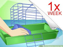 How To Control Odors in Hamster Cages