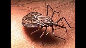 Kissing Bugs and Chagas Disease