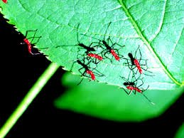 The Predators of Assassin Bugs