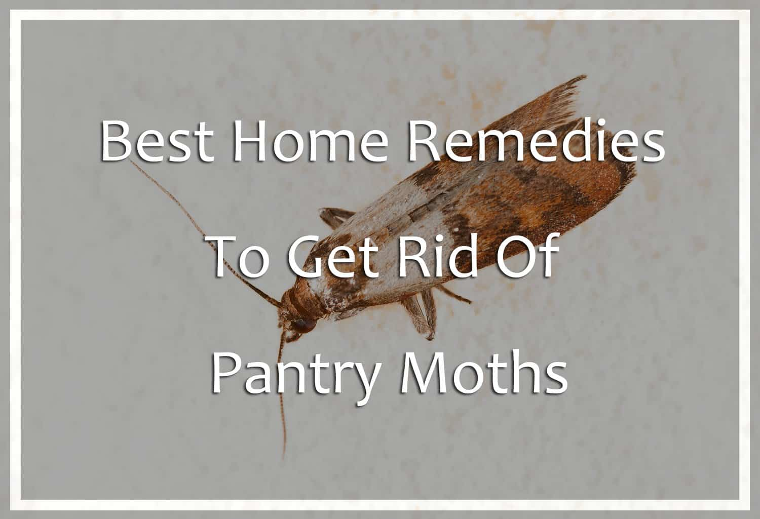 Home Remedies to Get Rid of Pantry Moths