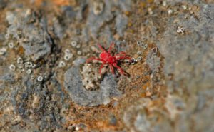 Identify a Plague of Red Spider