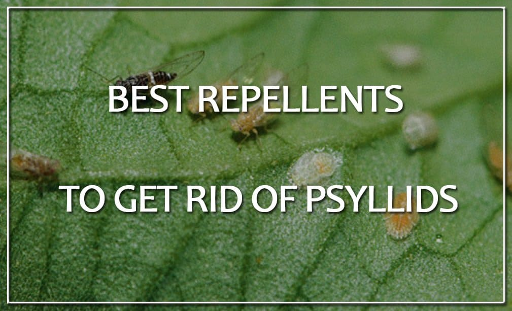 Repellents to Get Rid of Psyllids