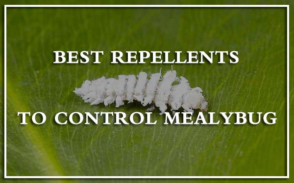Best Repellents