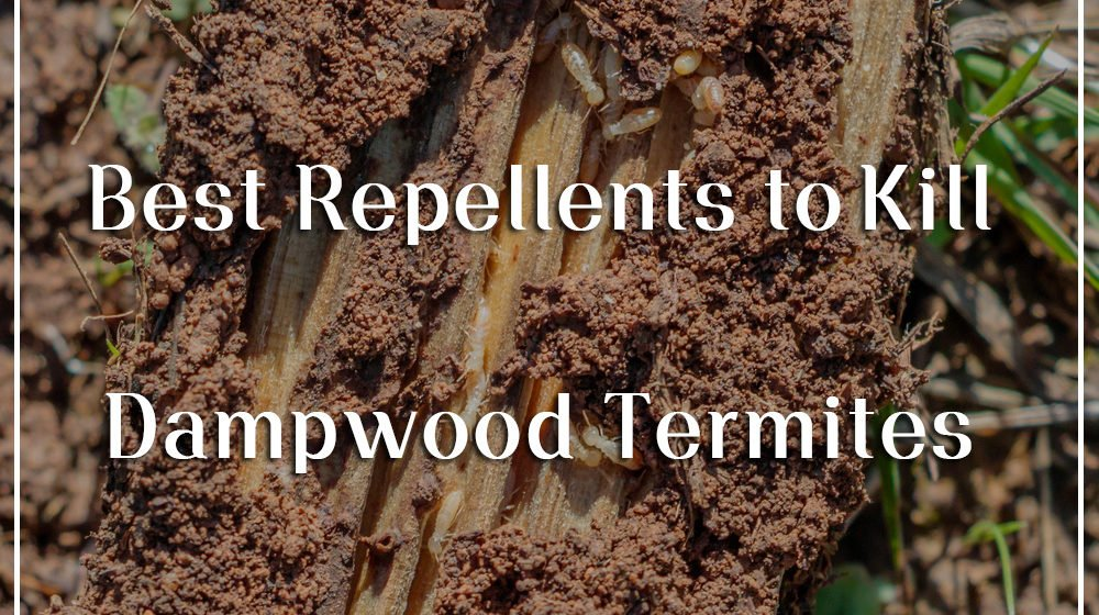 Best Repellents to Kill Dampwood Termites