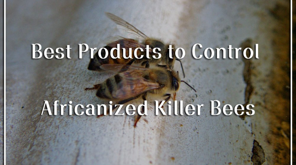 Best products to get rid of bees