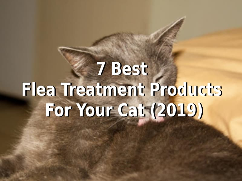 Reviews of the 7 Best Products for Flea Treatments (2019)