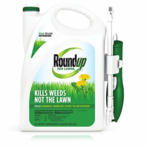 Roundup For Lawns RTU Wand