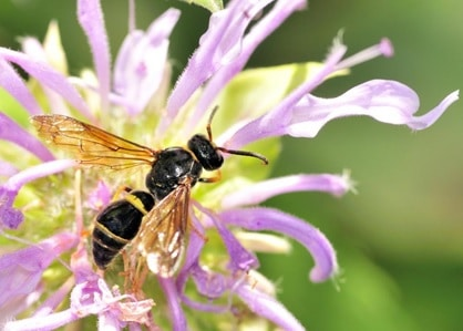 A large wasp