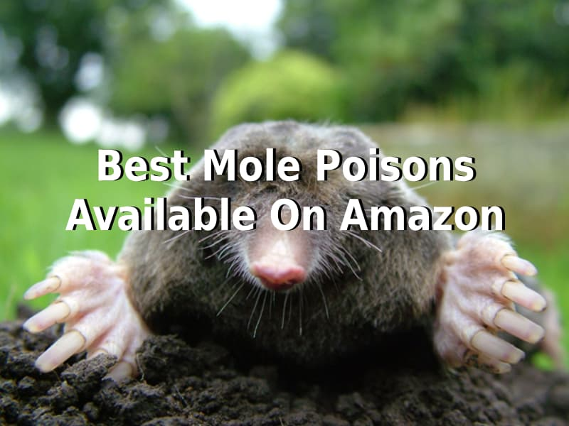 Best Mole Poisons available on Amazon