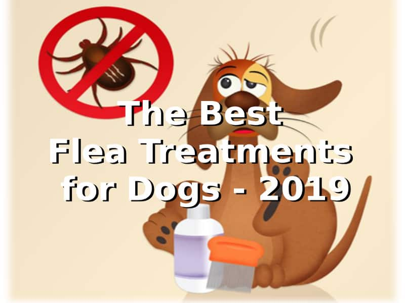 Top Flea Treatment Products for Dogs