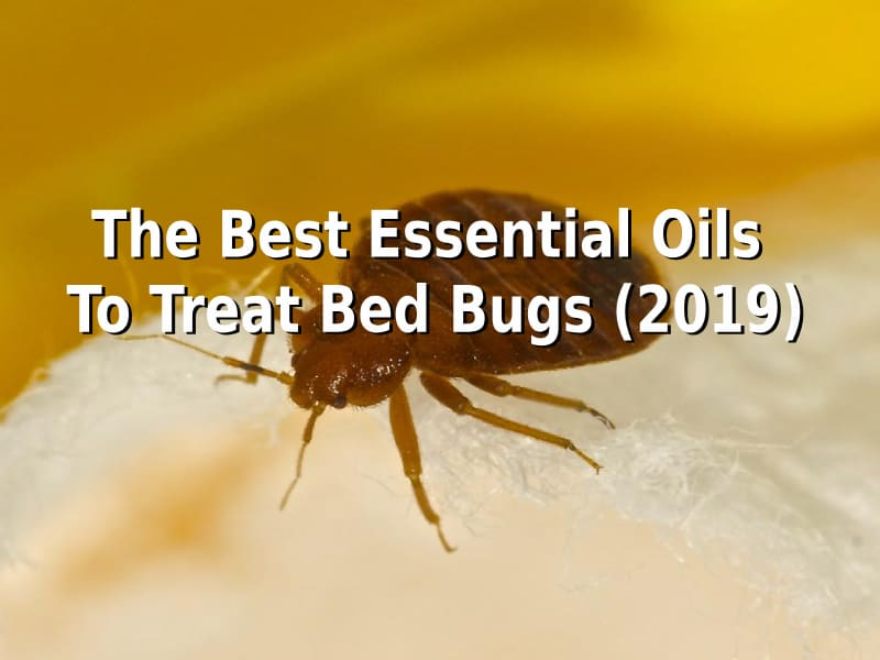 The Best Essential Oils To Treat Bed Bugs (2019)
