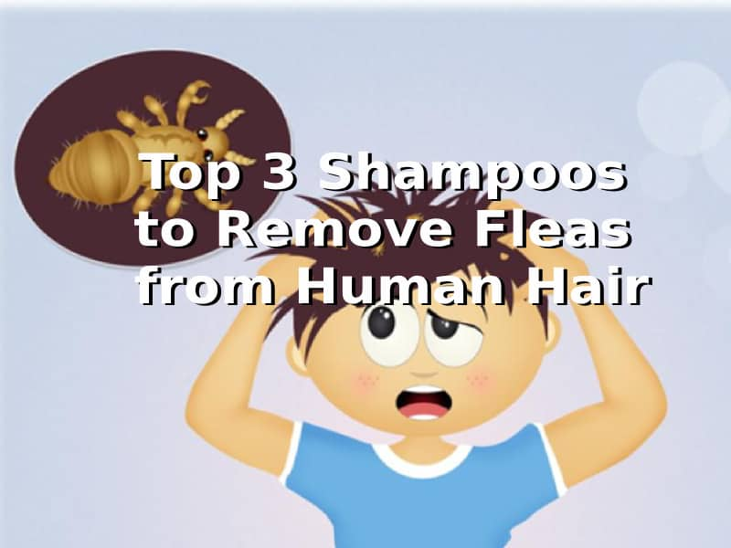 best flea shampoo human hair