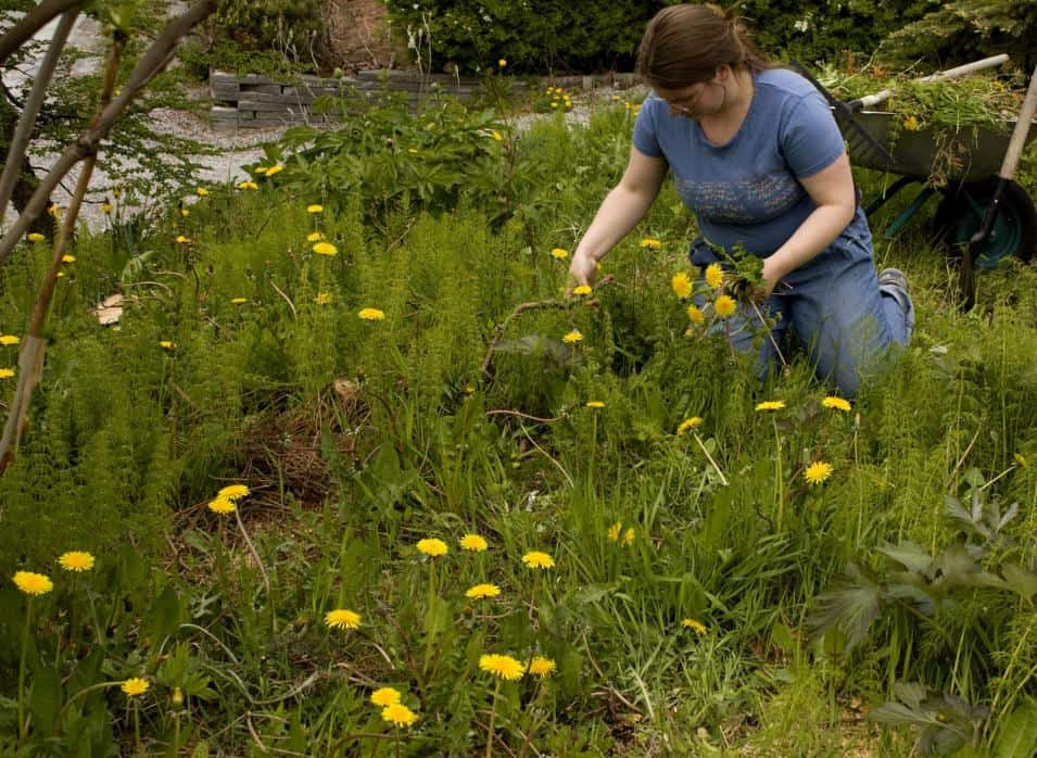 Top weed killers for lawns