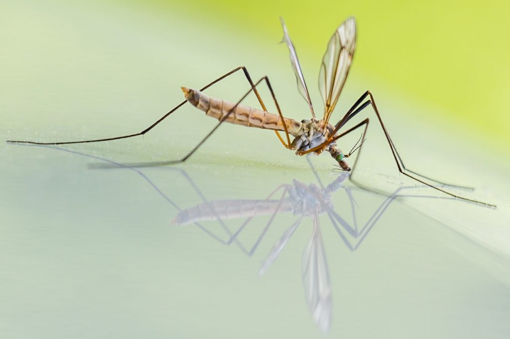 How to get rid of mosquitoes from home and yard