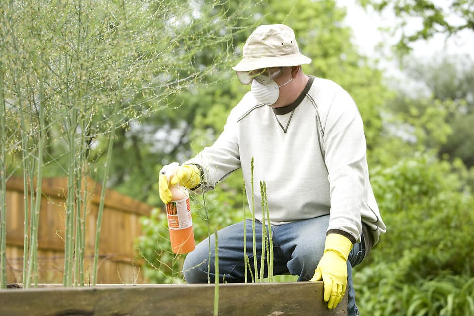 A man spraying a pesticide